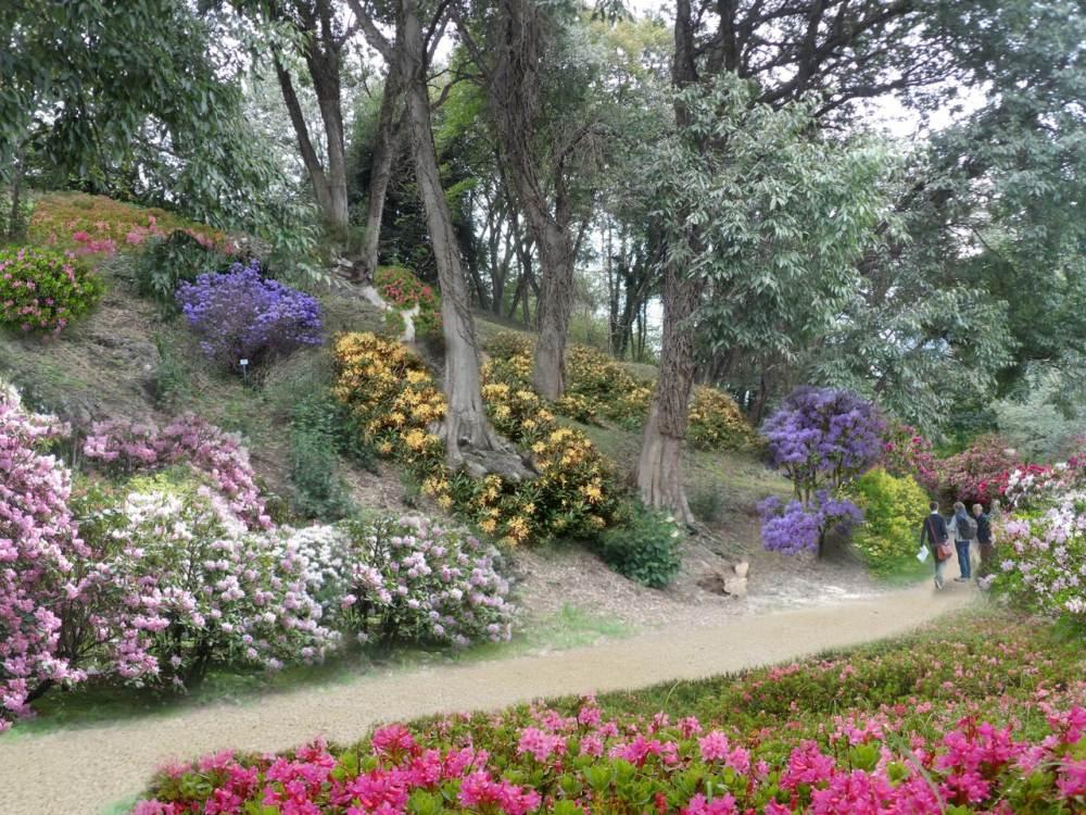 Rododendri - DOPO